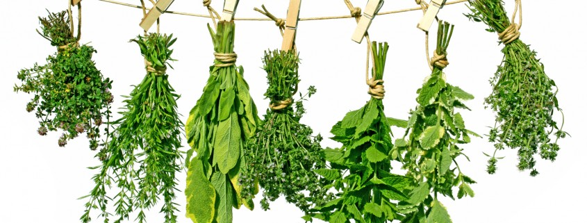 Herbs on line