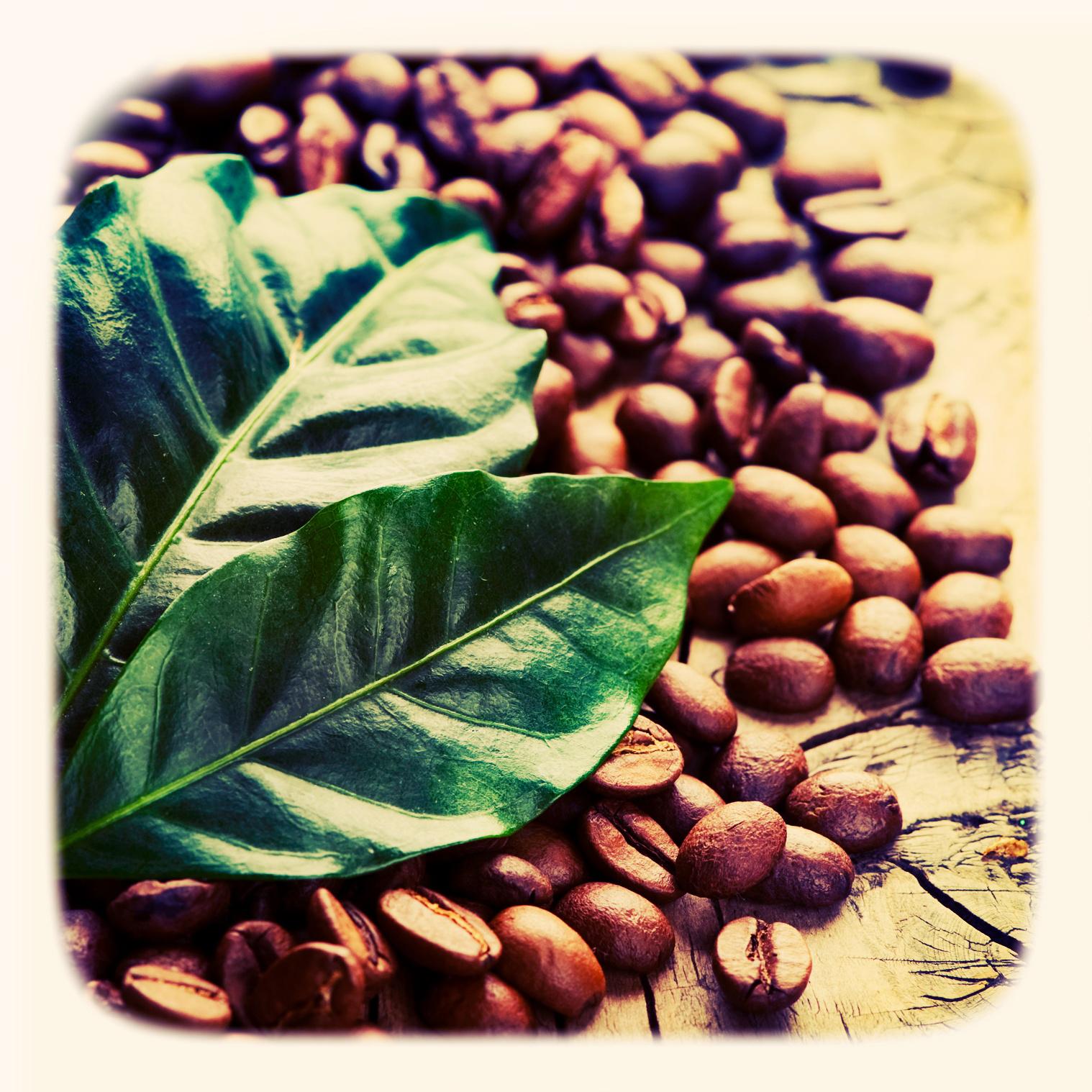 kawa z listkiem