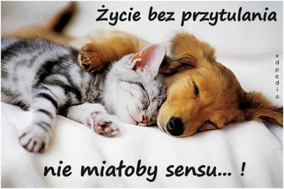 zycie_bez_przytulania_nie_mialoby