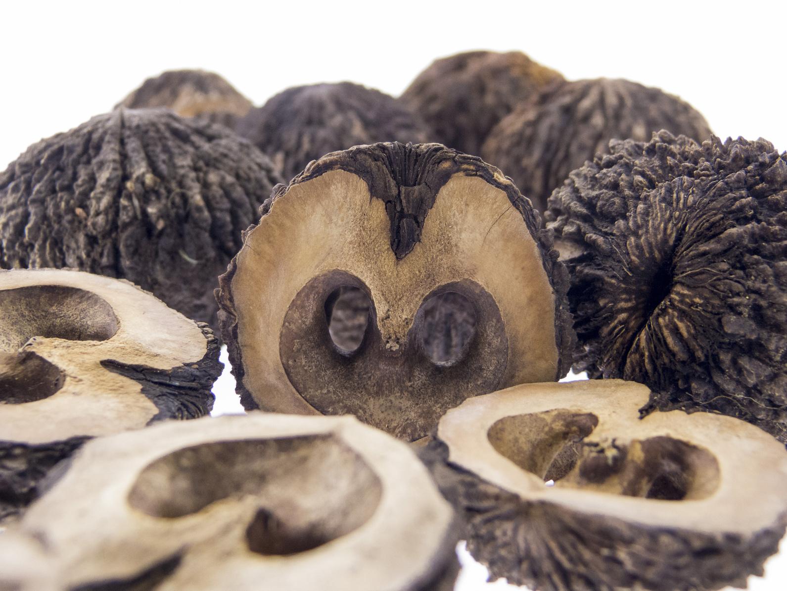 Schwarze Walnuss, Schwarznuss, Frucht, Juglans nigra L.