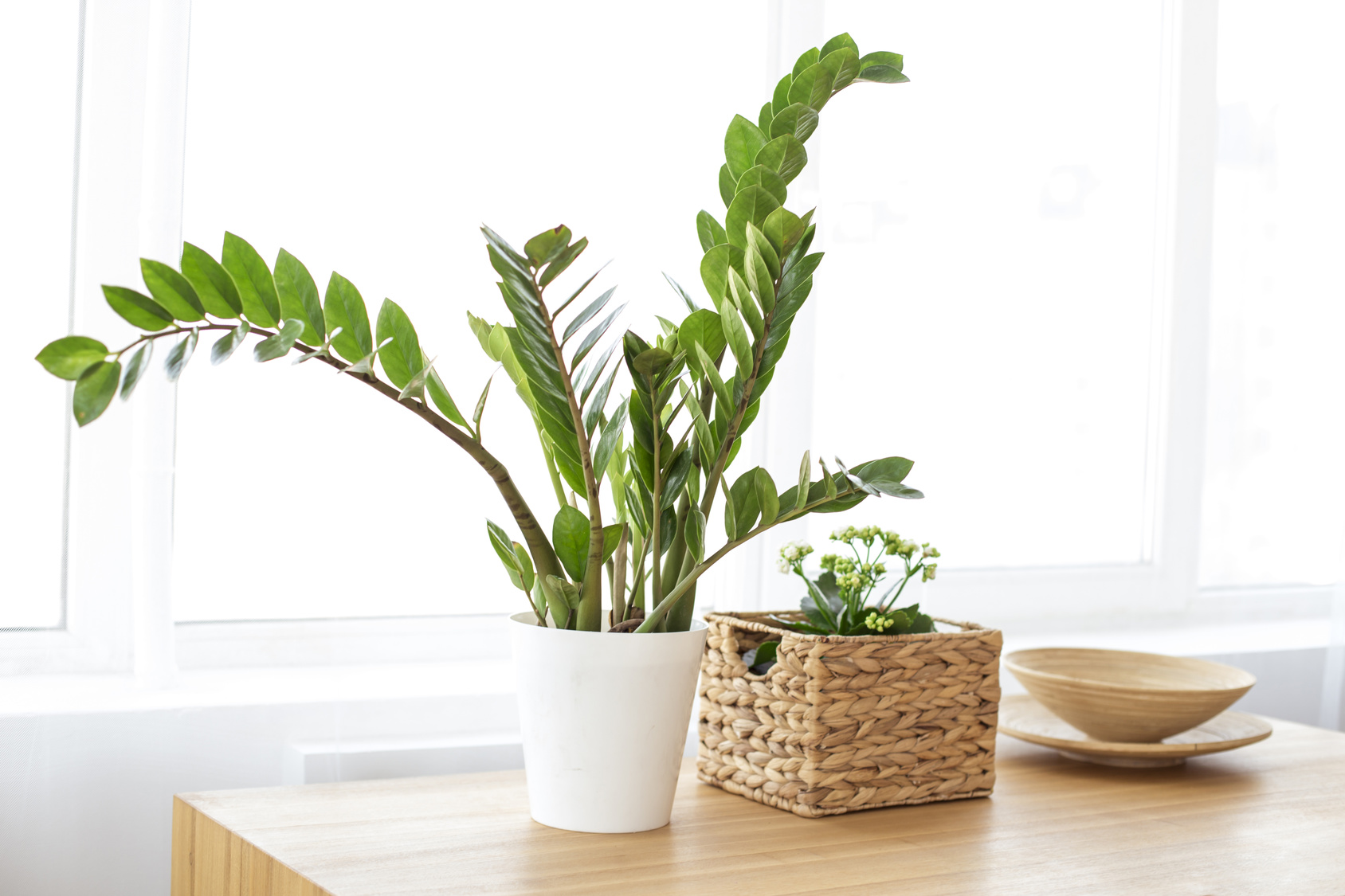 Modern clean interior with plant