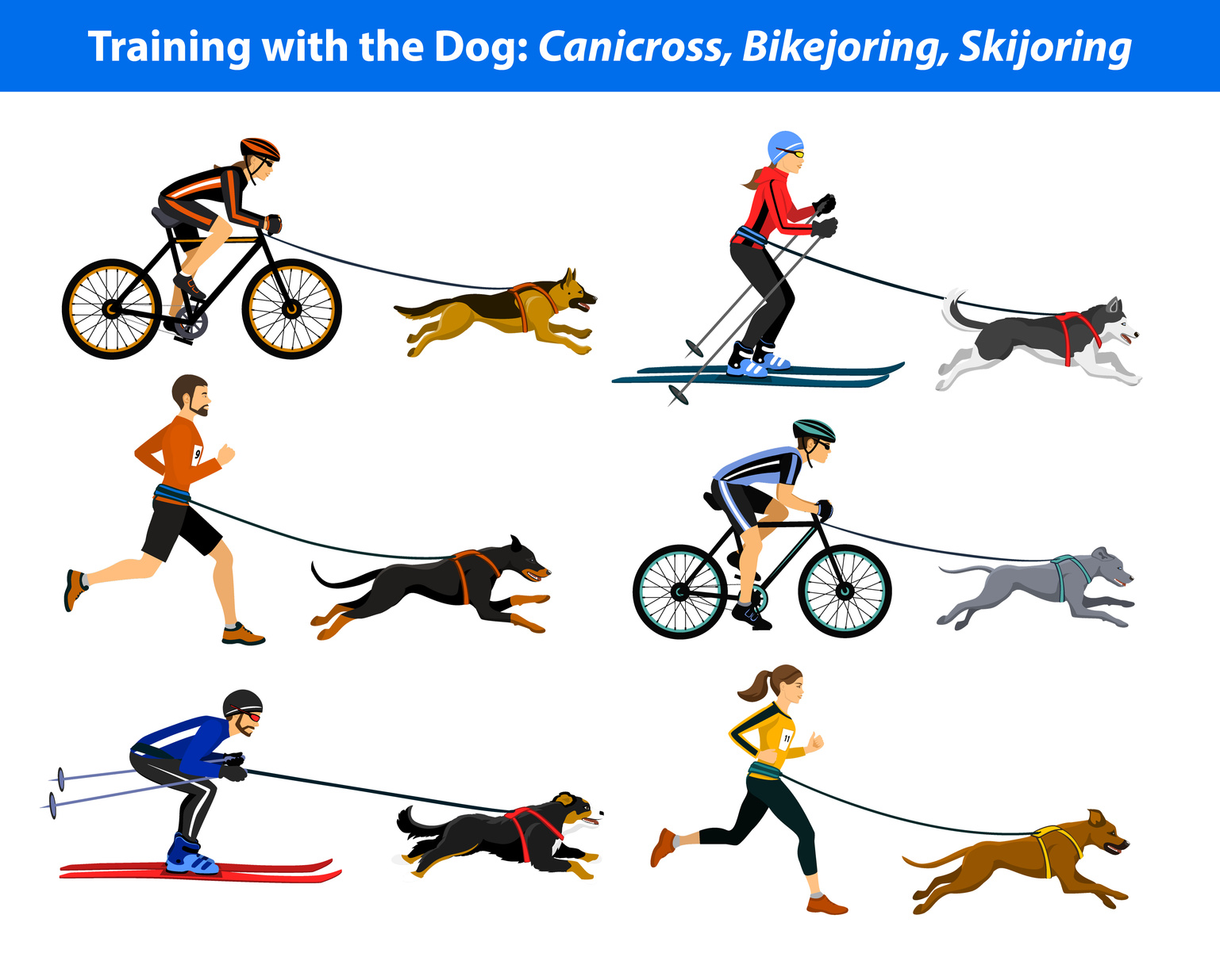 Training Exercising with dog: canicross, bikejoring, skijoring