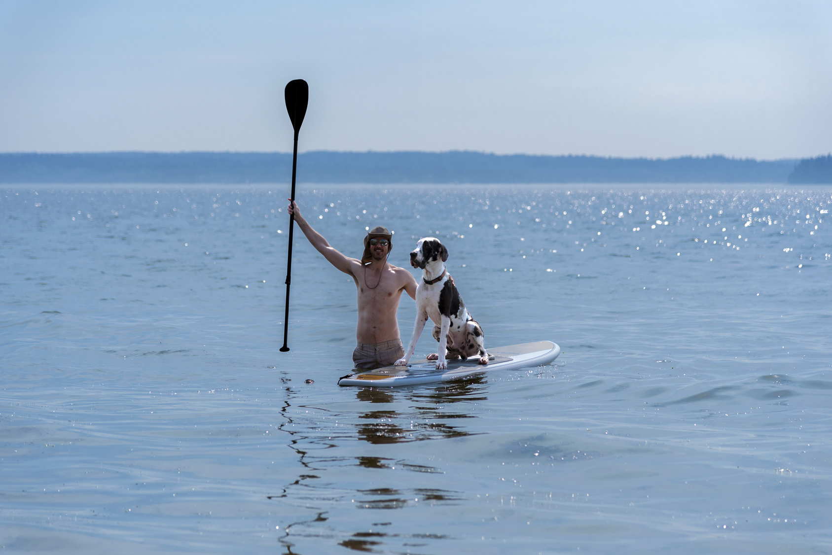 Man teaching harlequin great dane dog how to use a standup paddle board on the sea
