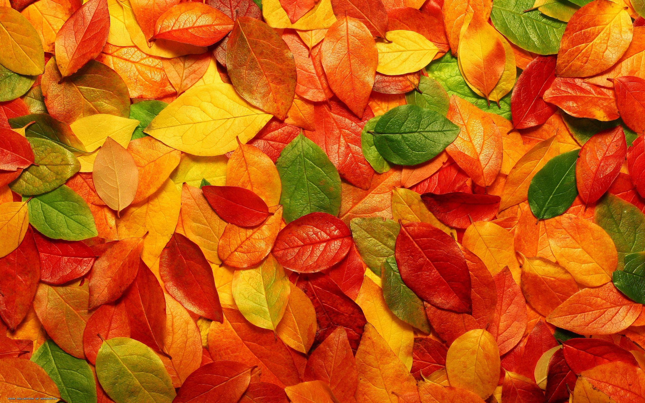 229418-autumn-leaves