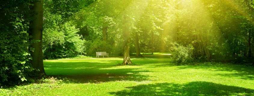 Bright sunny day in park. The sun rays illuminate green grass