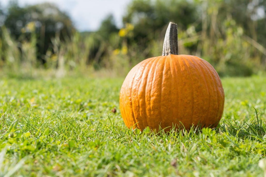 Krbis zum Fest Halloween