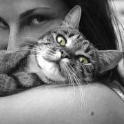 animal-black-and-white-cat-39493