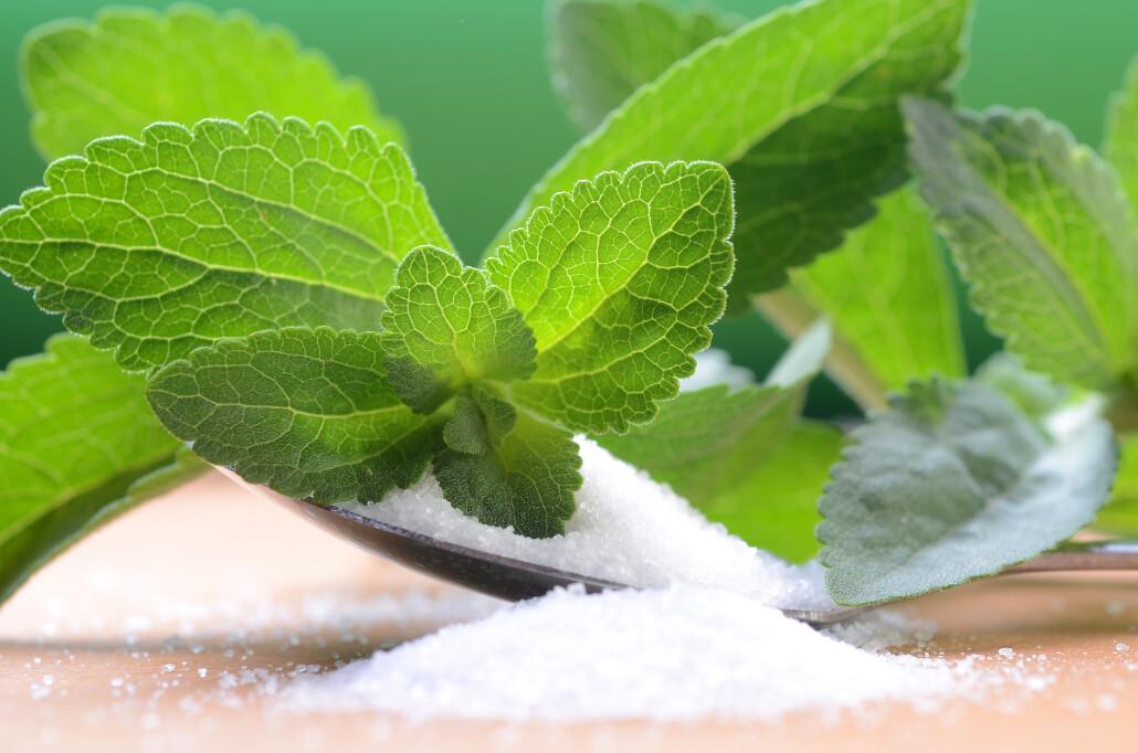 stevia rebaudiana - the sugar plant
