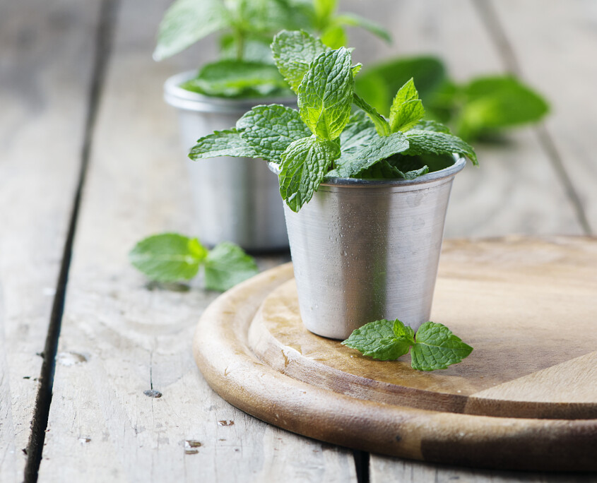 Green fresh mint on the wooden table